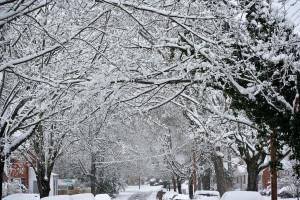 snow-glory